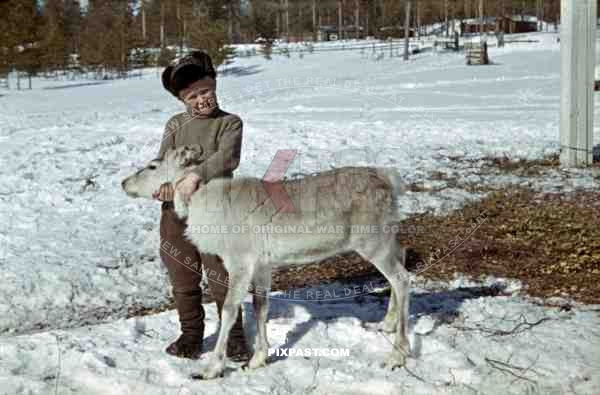 boy with caribou calf, Finland 1944