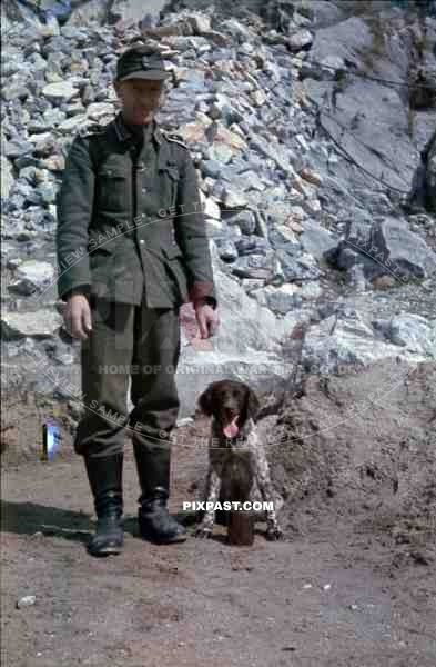 German Feldwebel with hound dog, Belgrade Serbia 1941
