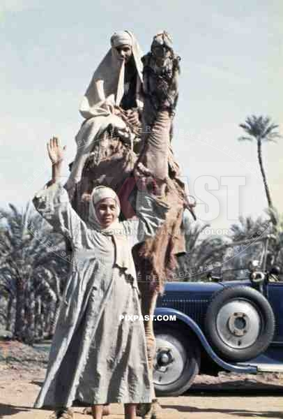 Man on a camel in Alexandria, Egypt 1939