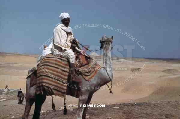 Man on a camel in Giza, Egypt 1939