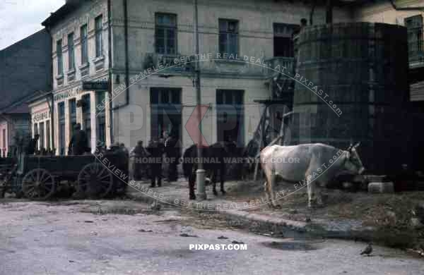 WW2 Color Belgrade Serbia 1941 Farmers Agriculture cows wagons carts food supply market