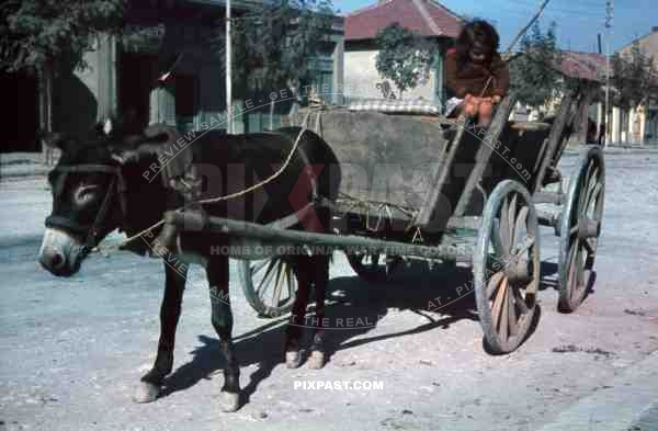 WW2 Color Belgrade Serbia 1941 Peasant child girl horse wagon cart donkey poor